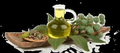 Castor Oil – OSG Exim